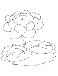 lotus with two leaves coloring page download free lotus with two