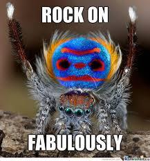 Funny Spider Meme Pictures To - peacock spider by boromirinmordor meme center