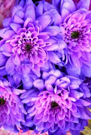 Lilac Flower by 87 Best Color Trend Lilac Images On Pinterest Color Trends