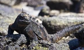 Iguana Island Chinese Hat Island Ecuador Blog About Interesting Places