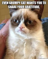 Gratitude Meme - cat gratitude