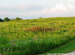 mn native plants sulis sustainable urban landscape information series university
