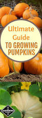 best 25 fall vegetables to plant ideas on pinterest