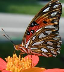 florida gardening ideas how to plant a butterfly garden