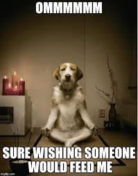 Feed Me Meme - image tagged in dog meditation imgflip