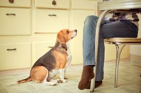 dogs at dinner table pancreatitis in dogs and cats