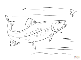 fish coloring page in walleye coloring page eson me