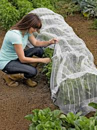 insect netting with hoops for pest control tunnel u2022 fine mesh