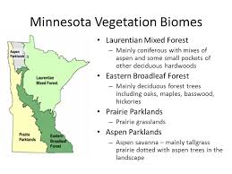Minnesota vegetaion images Forestry test basics how to measure the diameter of a tree stand jpg