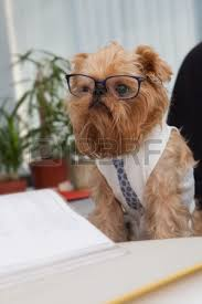 dog accountant sitting in an office chair on the table of