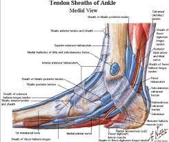 High Ankle Sprain Anatomy Posterior Tibial Tendon Insufficiency Ptti Foot U0026 Ankle