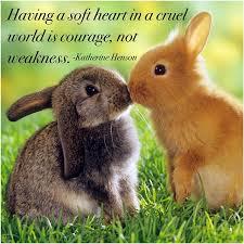 Goodnight Meme Cute - meme bunny cute on instagram