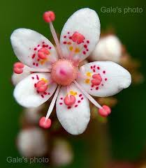 White Flowers Pictures - best 25 exotic flowers ideas on pinterest exotic plants