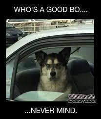 Funny Sunday Memes - who s a good boy funny meme pmslweb