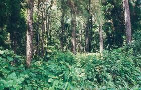 Tropical Plants Pictures - various tropical rainforest plants conserve energy future