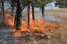 Wild Fires In Oregon State by Utah Man Accused Of Setting Several Wildland Fires In Oregon