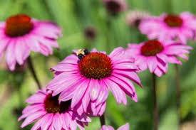 houston flowers 15 prettiest flowers for houston scent violet flowers