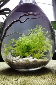moss water terrarium this is beautiful never thought of a water
