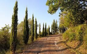beautiful road u0026 trees italy wallpapers beautiful road u0026 trees