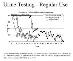 drug detection time table marijuana drug test detection times california norml