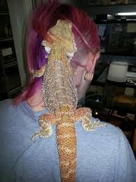 color bearded dragon animal ark kingwood