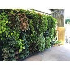 Vertical Garden For Balcony - vertical gardens in ahmedabad gujarat manufacturers u0026 suppliers