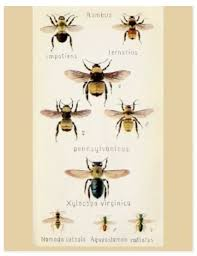 25 vintage bee ideas bee images bee
