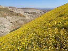 native northern california plants programs natural resources native plant communities about