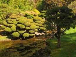 san francisco native plants thursday u0027s child japanese tea garden san francisco of muses