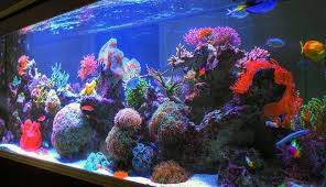 awesome fish tank design ideas ideas decorating interior design
