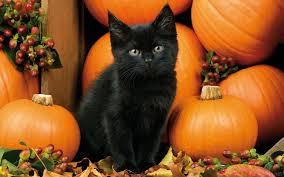 fall halloween background cats autumn kitten cat berries pumpkins fall halloween black