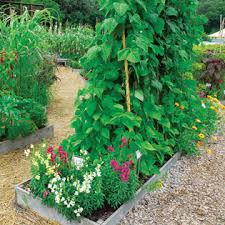 wise pairings best flowers to plant with vegetables organic