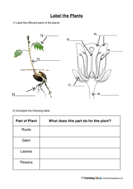 label the plants teaching ideas