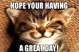 Have A Great Day Meme - hilarious have a great day cat meme have a great day quotes
