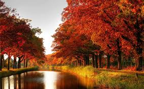 fall landscape autumn fall landscape with a tree of colorful