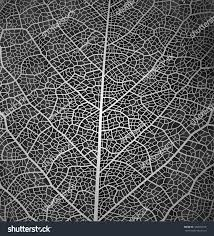 leaf vector texture pattern background black stock vector