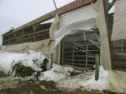 The Barn Wooster Ohio Pennsylvania Barn Collapse Traps Cows Farm And Dairy