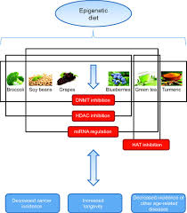 epigenetic linkage of aging cancer and nutrition journal of