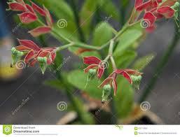 native plant nursery santa cruz articles with plant nursery santa cruz tag plant nursery santa