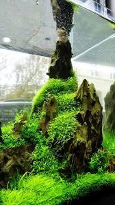 japanese aquascape sumida aquarium reloaded aquariums fish tanks and ideas