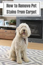How To Remove Dog Urine From Carpet With Hydrogen Peroxide
