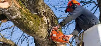 trree stump removal cutting surgeons in birmingham