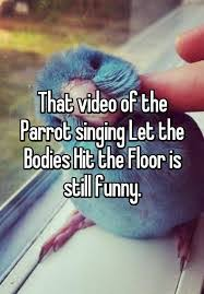 Hit The Floor Hd - parrot singing bodies hit the floor hd awesome bodies hit the