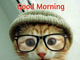 Cute Good Morning Meme - 40 good morning wishes for cat lovers images pictures happy wishes