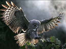 Owl Lovers by 71 Best Owl Pics Images On Pinterest Animals Nature And Birds
