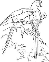 two macau parrot coloring page download u0026 print online coloring