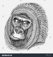 patterned head gorilla graphic ornamental style stock vector