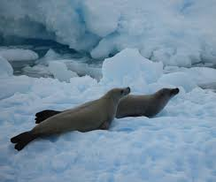 antarctica facts for kids complete information for
