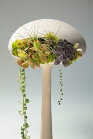 Design For Indoor Flowering Plants Ideas Plants That Purify Air In Living Spaces