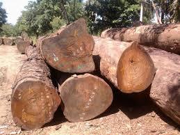 tali log at rs 42000 cubic meter velacheri chennai id